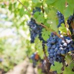 rack-and-return:-wset-courses-in-barcelona