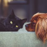 how-can-you-rent-an-apartment-with-pets?