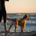 fun-things-to-do-with-your-dog-in-barcelona