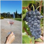 do-emporda-wine:-the-hidden-secret-of-the-costa-brava